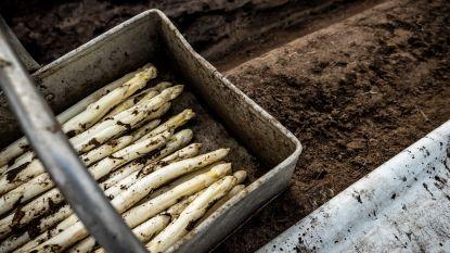 """Prijzen asperges ingestort door corona: """"Normaal 10 euro voor een kilo, nu amper 4"""""""