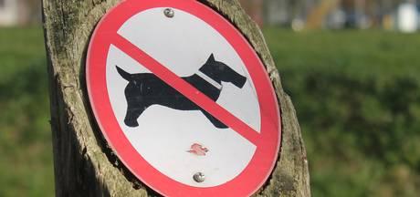 Goudplaat bij Kamperland taboe voor honden