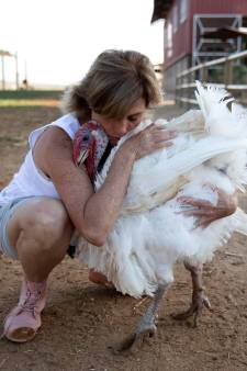 Op deze boerderij wordt geknuffeld met kippen en dragen kreupele schapen spalkjes