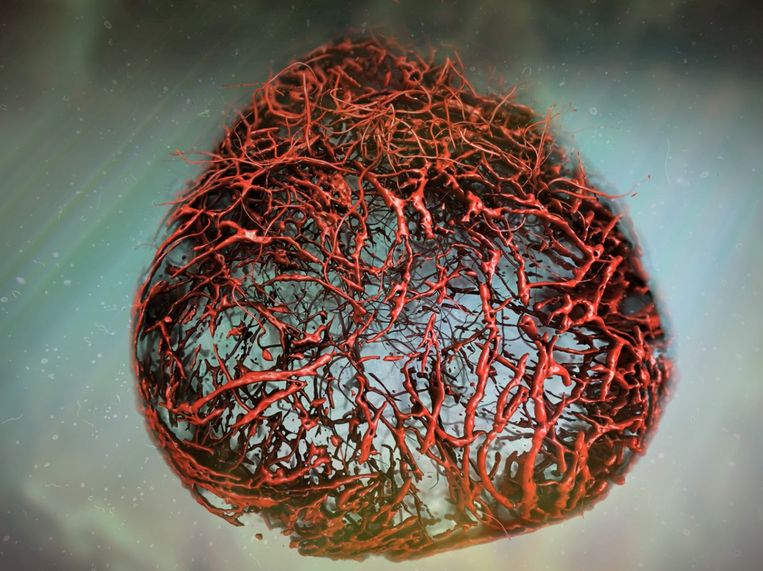 Voor het eerst kweken wetenschappers bloedvatenstelsels in lab