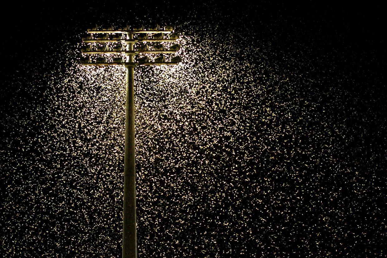 Duizenden motten fladderend rond een lichtbron.