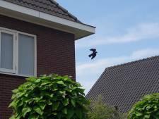 Brandweer Aalten bevrijdt kauw uit benarde situatie