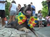 Honden verkleed in optocht voor Braziliaans carnaval