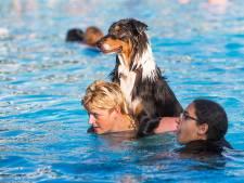 Zwembad Het Keerpunt is een soap zonder weerga