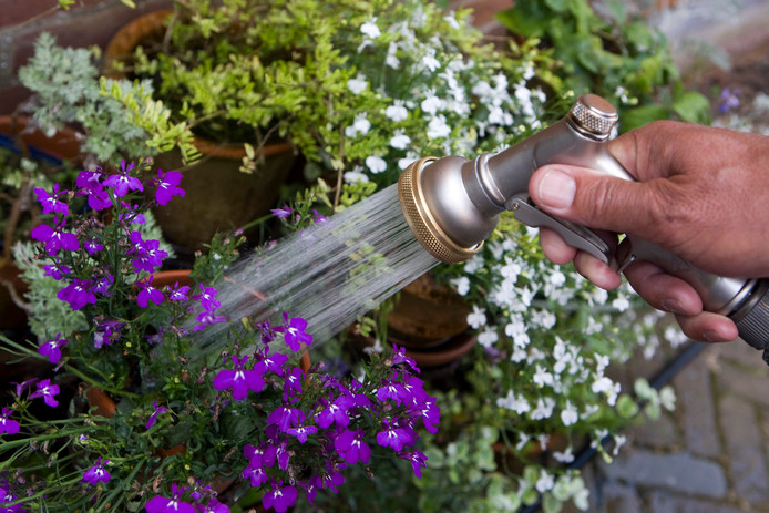 Planten moet je ook niet teveel water geven, dan worden ze lui.