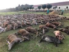 Portugal woest op jagers die meer dan 500 herten en wilde zwijnen doden