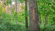 Infowandeling over geplande kap in Vagevuurbossen