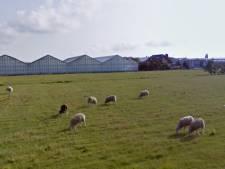 Gemeente trekt zich terug uit nieuwbouwproject in Kwintsheul