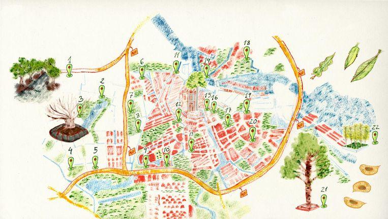 De bomenkaart van Amsterdam Beeld Cristina Garcia Martin