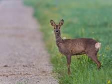 Wilde dieren in Brabant hebben het zwaar, maar er zijn lichtpuntjes