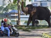 Ideaal vakantieland Sri Lanka steeds populairder onder Nederlanders