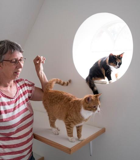 Wanhopig op zoek naar opvang voor de kat