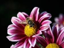 'Tuincentra, ga de natuur écht helpen en bied de juiste planten aan'