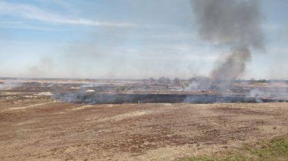 Weer heidebrand op schietveld in Leopoldsburg