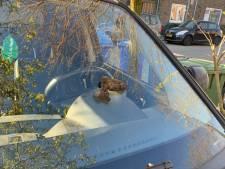 Vier weken na de dood van zijn hond vindt Gerben uit Amersfoort een hondendrol op zijn auto: 'Wie doet dit nou?'