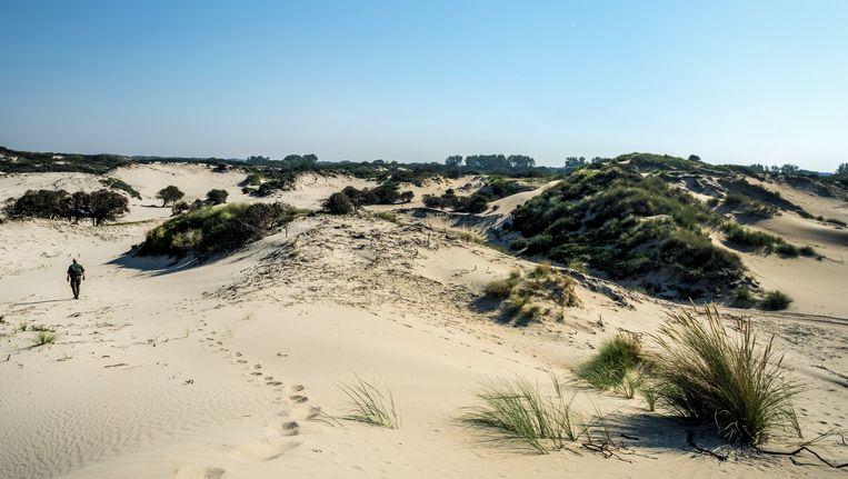 Waterwin- en natuurgebied Meijendel bij Wassenaar. Dit gebied wordt mogelijk onderdeel van Nationaal Park Hollandse Duinen. Beeld Raymond Rutting / de Volkskrant