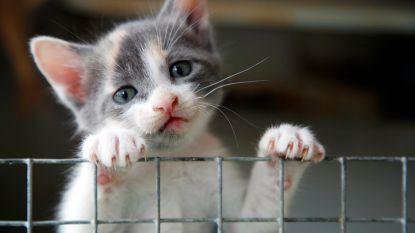 """Politie waarschuwt voor koppel kinderlokkers in Waregem: """"Kom kijken naar kleine kat"""""""
