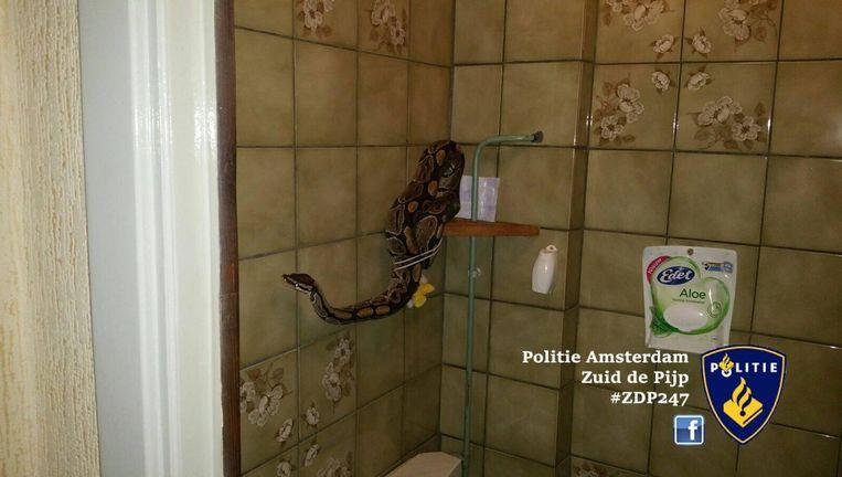 De politie plaatste een foto op Facebook om zo de eigenaar van de slang te kunnen achterhalen. Beeld Politie Amsterdam Zuid de Pijp