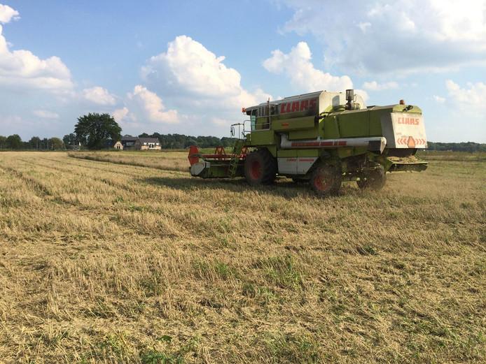 De oogst van biologisch graan op de Esvelderbeekzone in Barneveld.