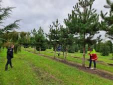 Langs de singel bij het Utrechtse Willemsplantsoen komen 37 nieuwe bomen