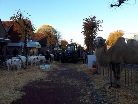 Er zijn niet alleen koeien en paarden op de Leste Mert.