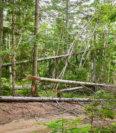 Baby sterft in armen van moeder door afgebroken tak in Duits bos