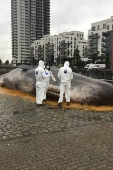 Une baleine échouée le long du canal à Bruxelles