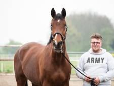 Einde aan drama rondom paard Belle Amie, Zoetermeerder herenigd met zijn merrie