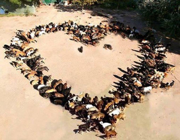 De straathonden vormen een hart.