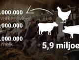 Wat betekenen de stikstofmaatregelen voor Twentse boeren?