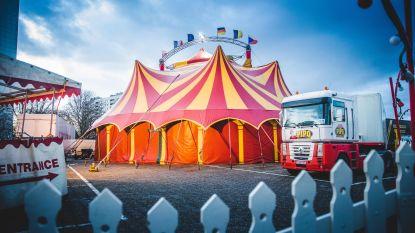 IN BEELD: Binnenkijken in Circus Pipo