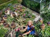 Hetty uit Nijmegen weet het zeker: 'Met paarse groenten word je honderd'