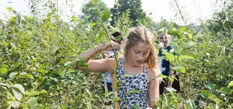 Subsidie voor 6 minibossen in Zeeland