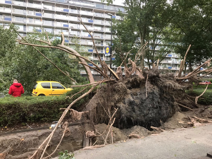 Een boom aan de Mozartlaan is door de storm omgevallen.