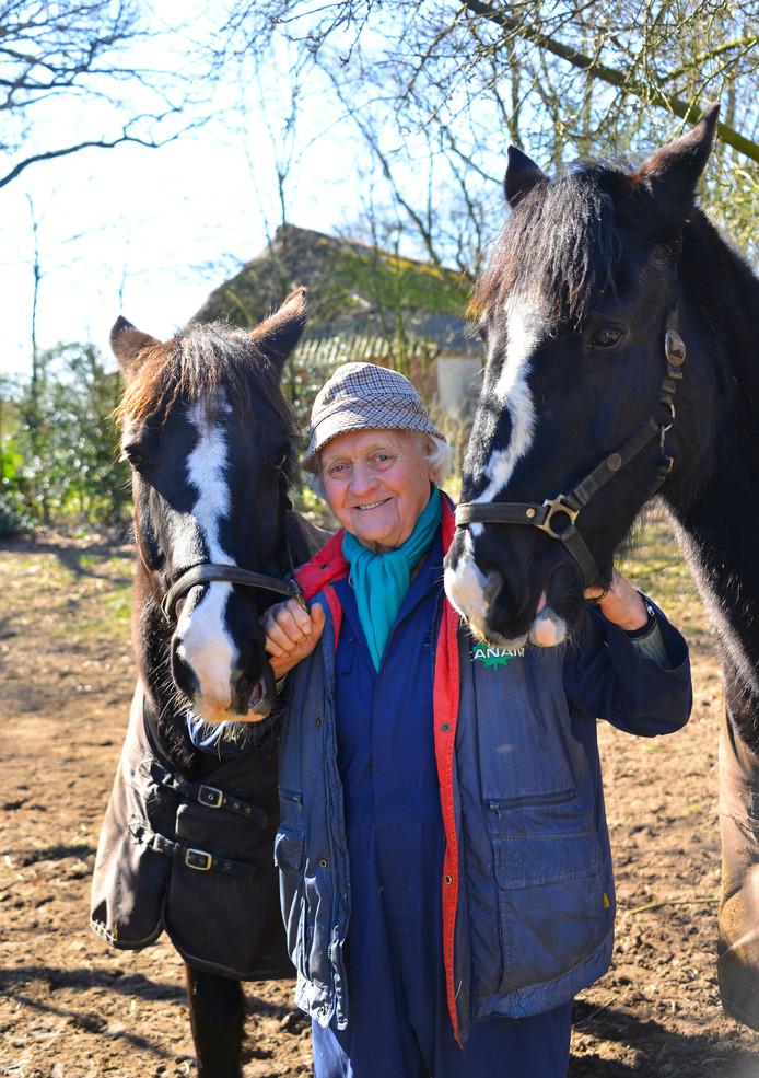 Piet Goossens (83) met zijn paarden, die hij dreigt te verliezen doordat hij mogelijk zijn stal moet afbreken. De stal zou vijftig jaar geleden zonder vergunning gebouwd zijn, ontdekte zijn buurvrouw.