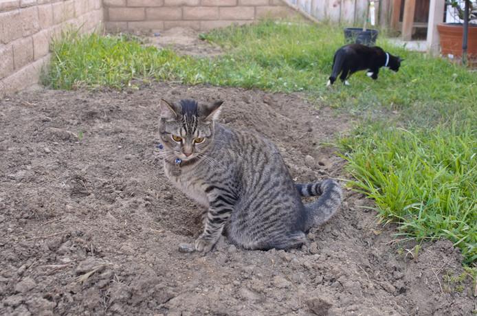 Hoe Je Poepende Katten Uit Je Tuin Weert Den Haag Ad Nl