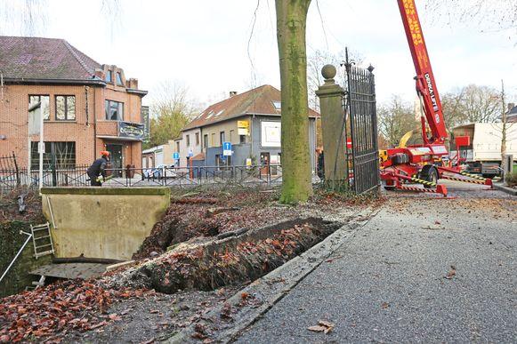 Een gespecialiseerd bedrijf moest eind vorig jaar al enkele gevaarlijke bomen vellen.