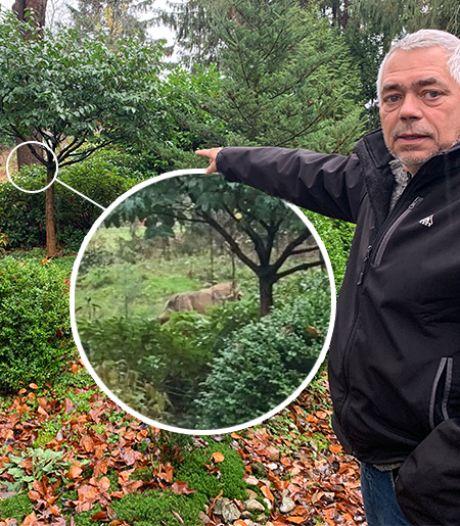 Wolf loopt in Emst door achtertuin van Gert: 'Wow' Maar Monique is niet blij en vreest voor haar hondjes