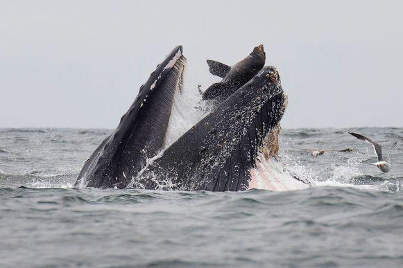 Het onwaarschijnlijke natuurspektakel dat zich afspeelde voor de kust van Californië.