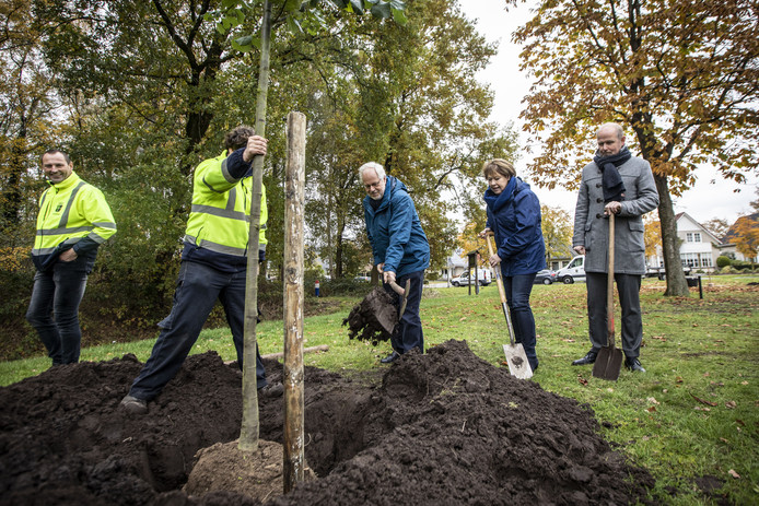Terwijl burgemeester Patrick Welman goedkeurend toekijkt, planten diens voorganger Theo Schouten en Toos Achterweust een boom in het Oldenzaalse Prominentenbos.