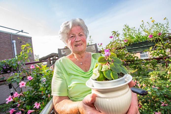 Bep Ruessink met het Kaaps viooltje dat het al negentien jaar lang volhoudt.