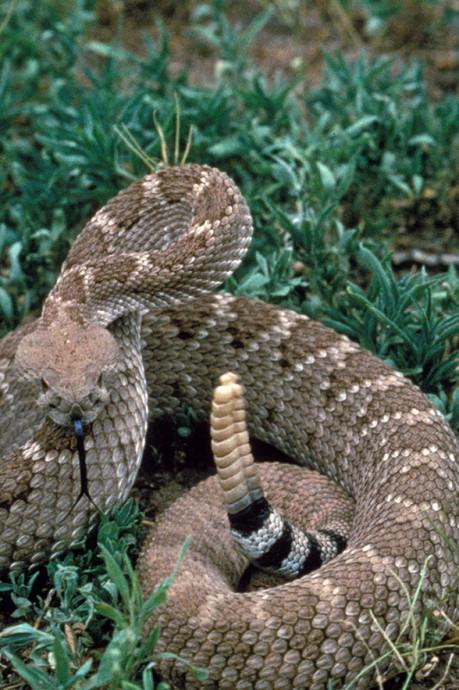Deux serpents très dangereux retrouvés au bord de la route près de Namur