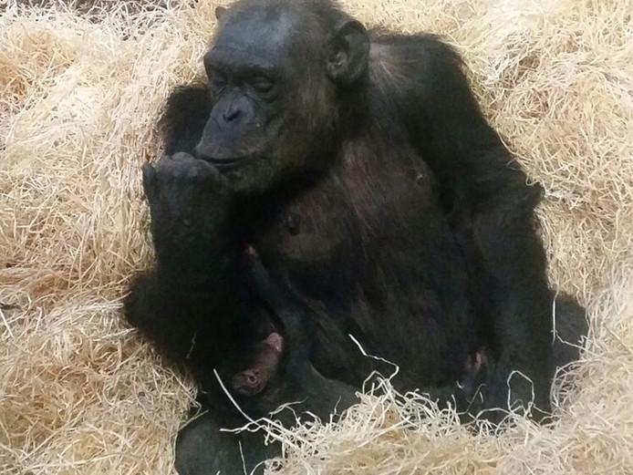 Moeder Christa met haar pasgeboren jong