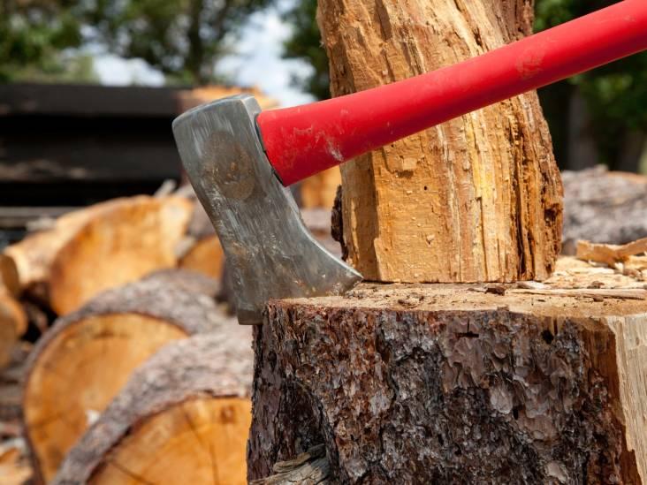 Bomen rooien voor nieuwe riolering? Het moet maar eens afgelopen zijn