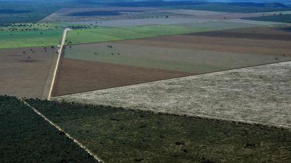 Ontbossing in Brazilië: Greenpeace onderzoekt impact van Belgische veeteelt