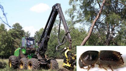 Houtprijs stuikt in elkaar: massale houtkap na aantasting door vraatzuchtige kevers