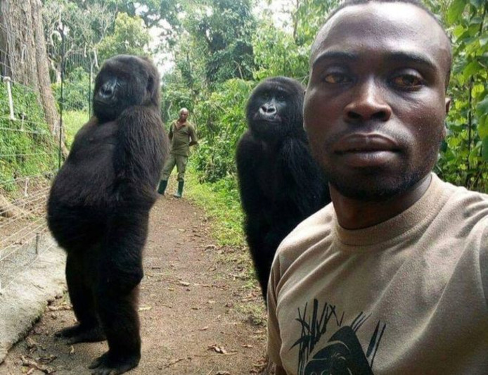 De gorilla's Ndakasi en Matabishi op de foto met rangers Mathieu Shamavu en Patrick Sadiki.