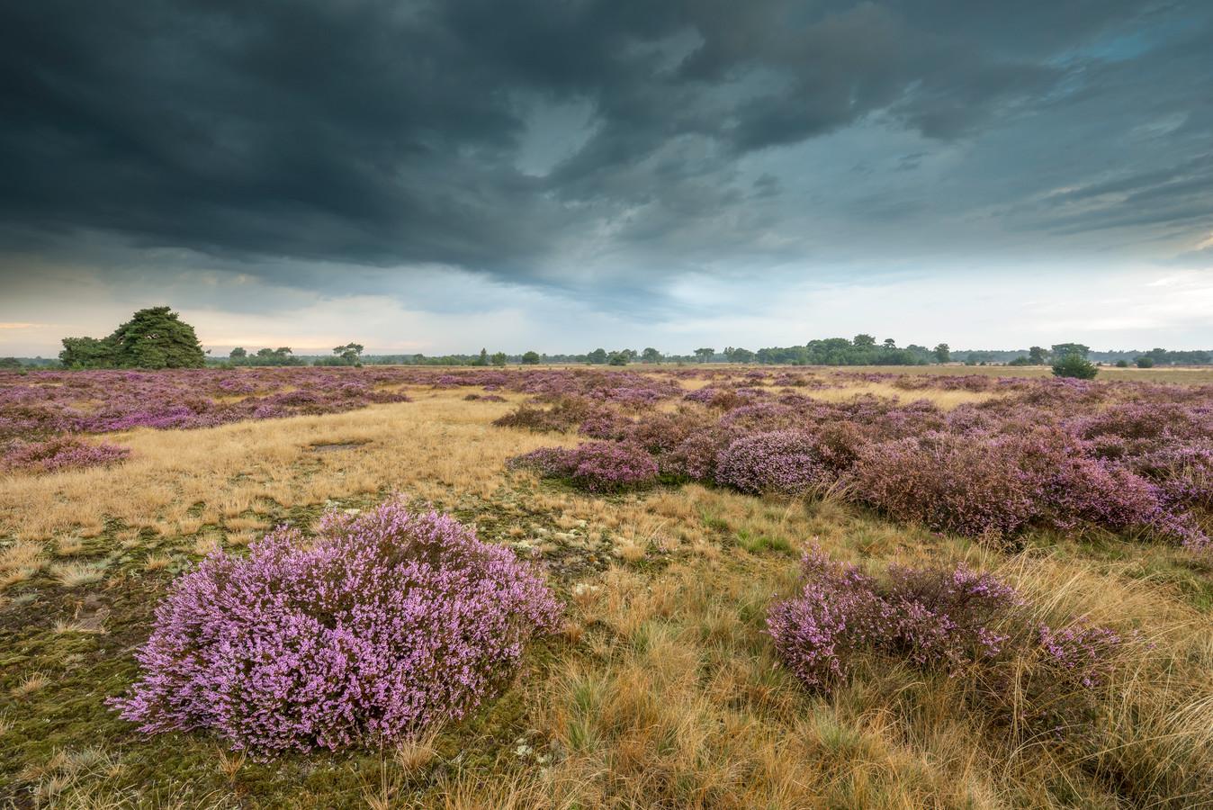 Donkere wolken boven de Strabrechtse Heide