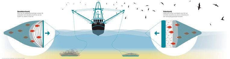 Het verschil tussen boomkorvisserij en pulsvisserij. Beeld Trouw