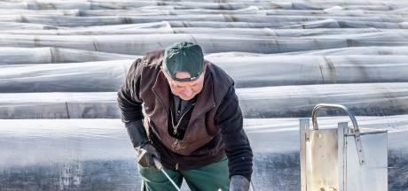 Ook aspergeseizoen start op lastig moment: seizoensarbeiders kunnen Polen niet uit